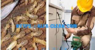 شركة مكافحة النمل الابيض بسيهات وبعنك