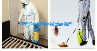 شركة مكافحة حشرات بسيهات وبعنك